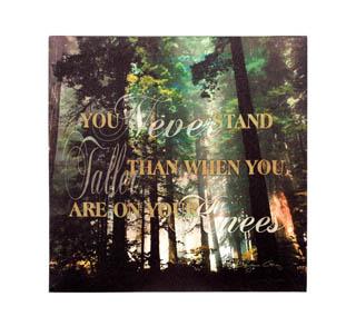 Wisdom of the Woods